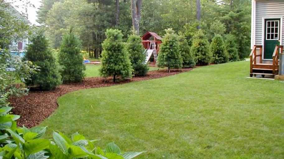 tree_line_landscaping_0